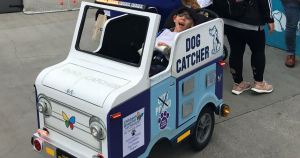 Boy in a wheel-chair costume dressed up as a dog catcher